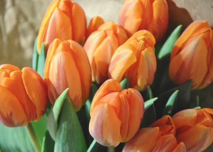 5x oranje recepten voor Koningsdag!