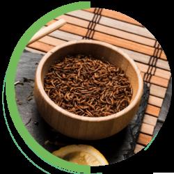 meelwormen duurzaam